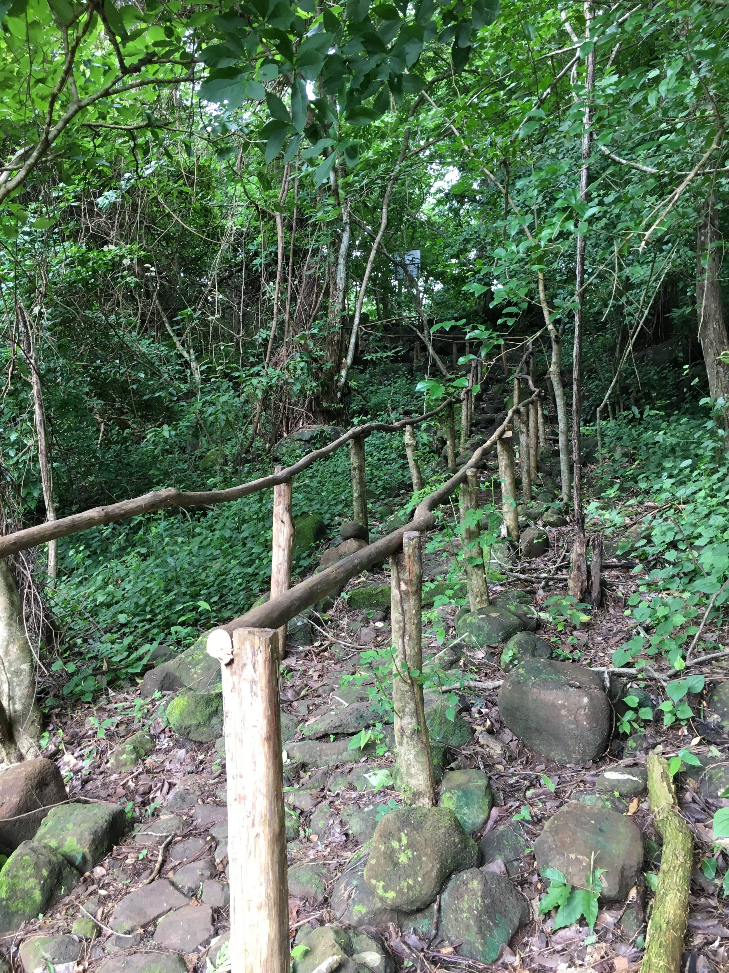 Trail that leads you through the coffee plantation and to the petroglyphs