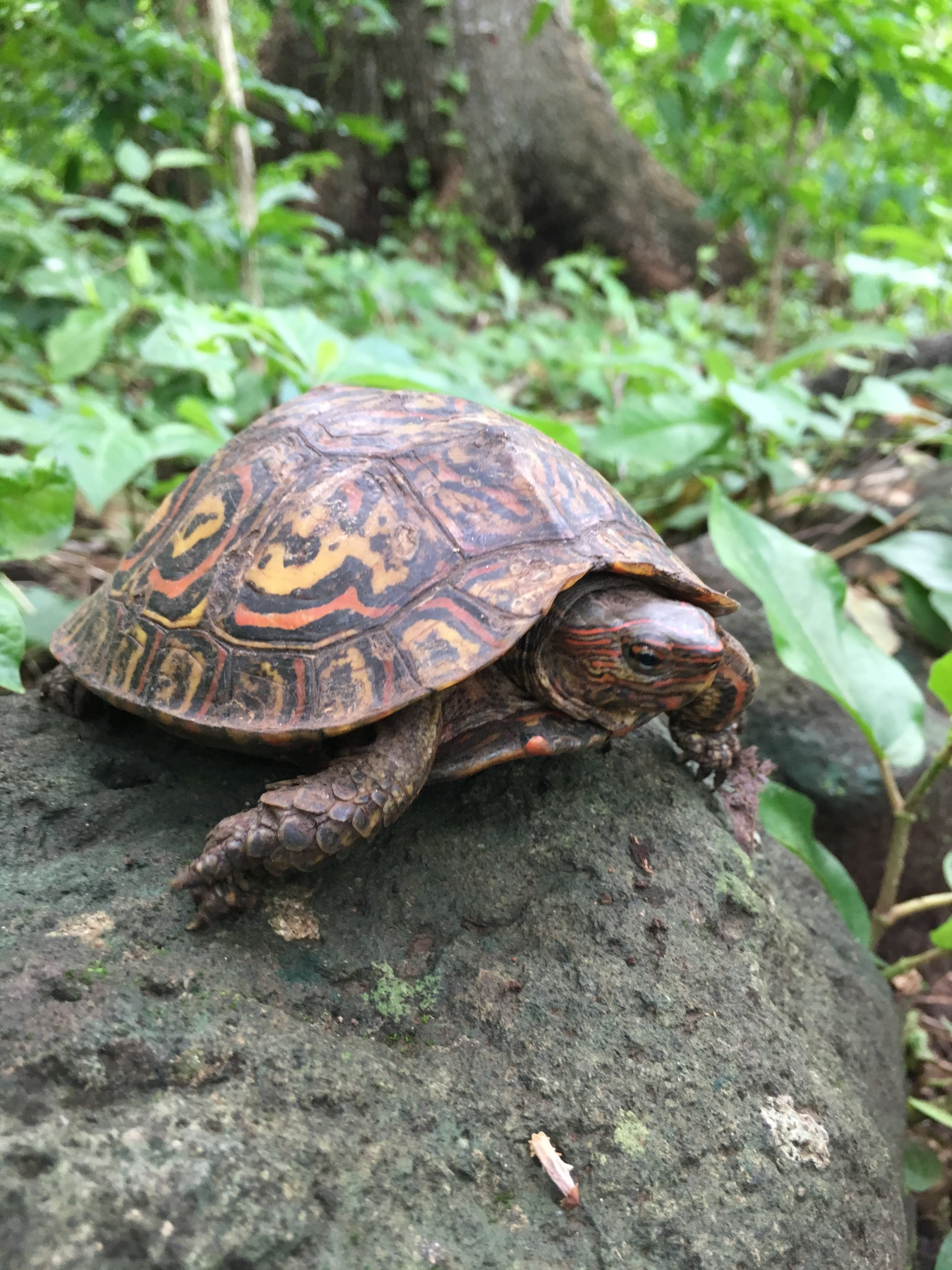 Turtle on the trail