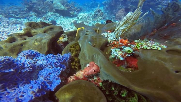 Amazing underwater corals