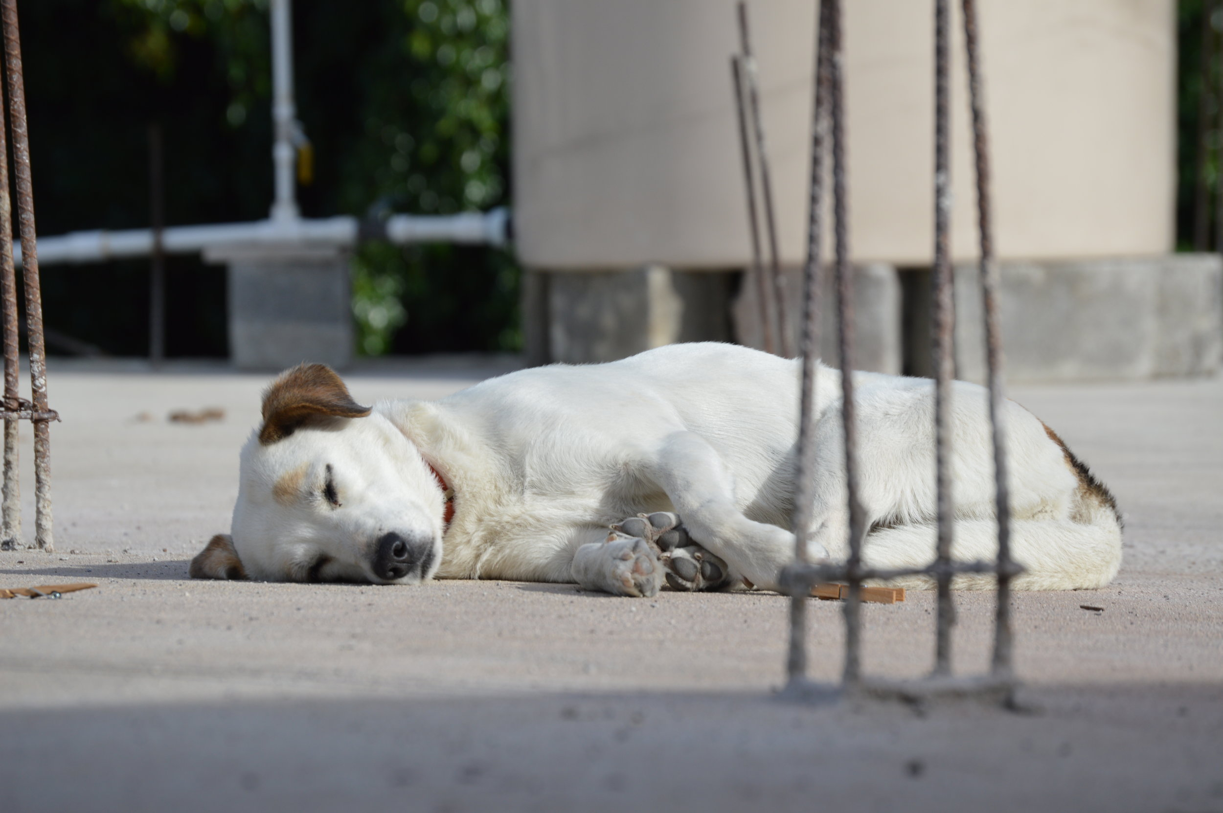 The stray dogs love to nap!