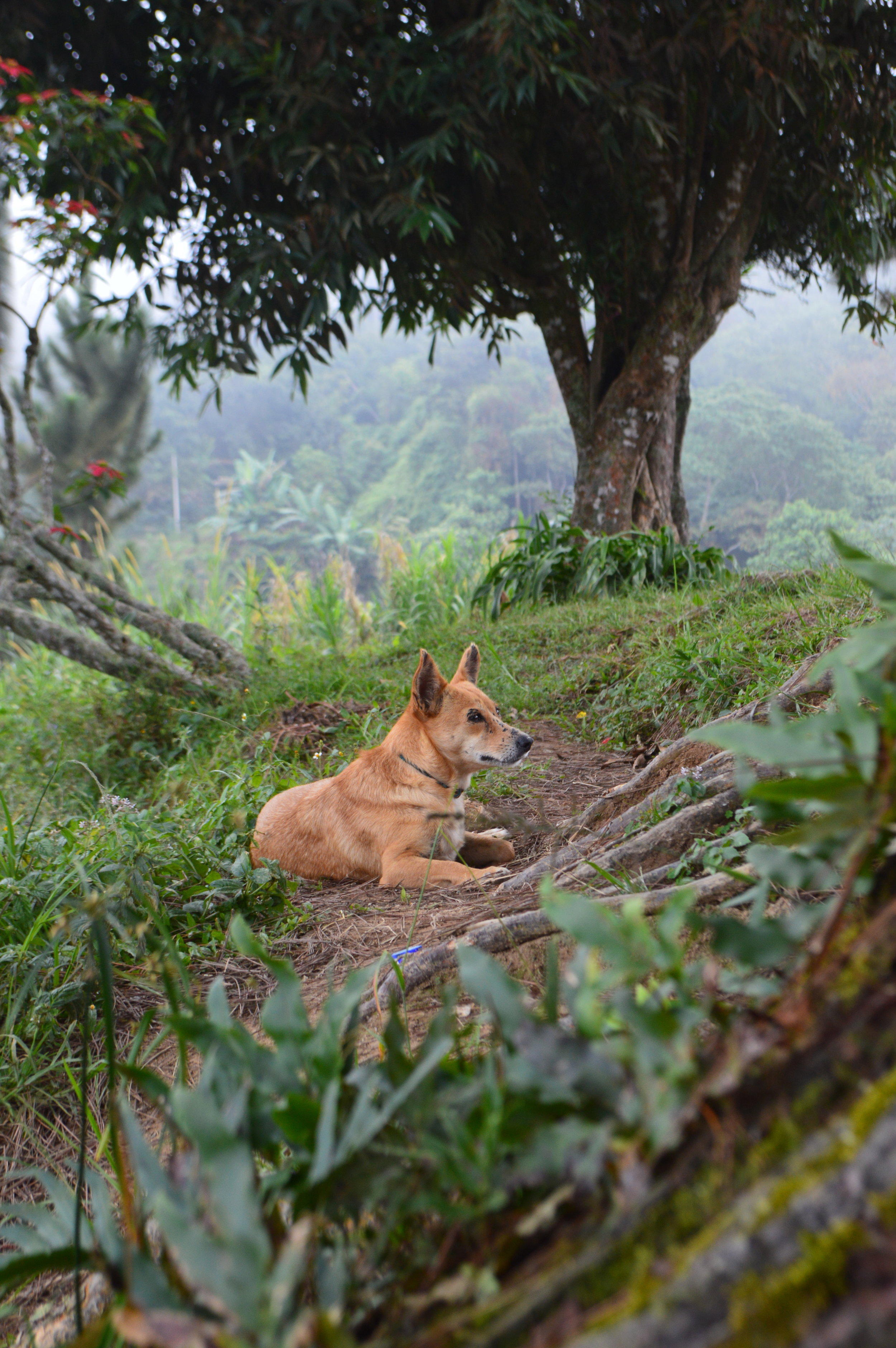 This dog from one of the fincas followed us for several miles and would stop when we stopped to take a break.