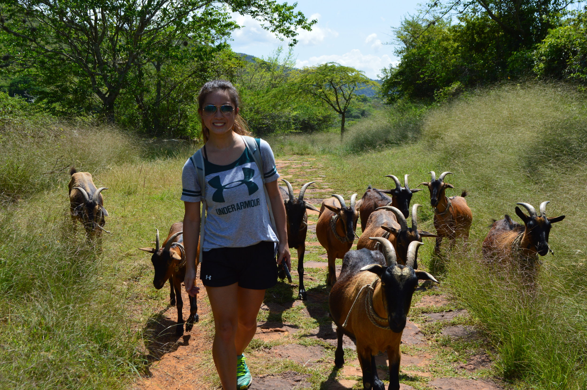 These goats walked quite a distances with us