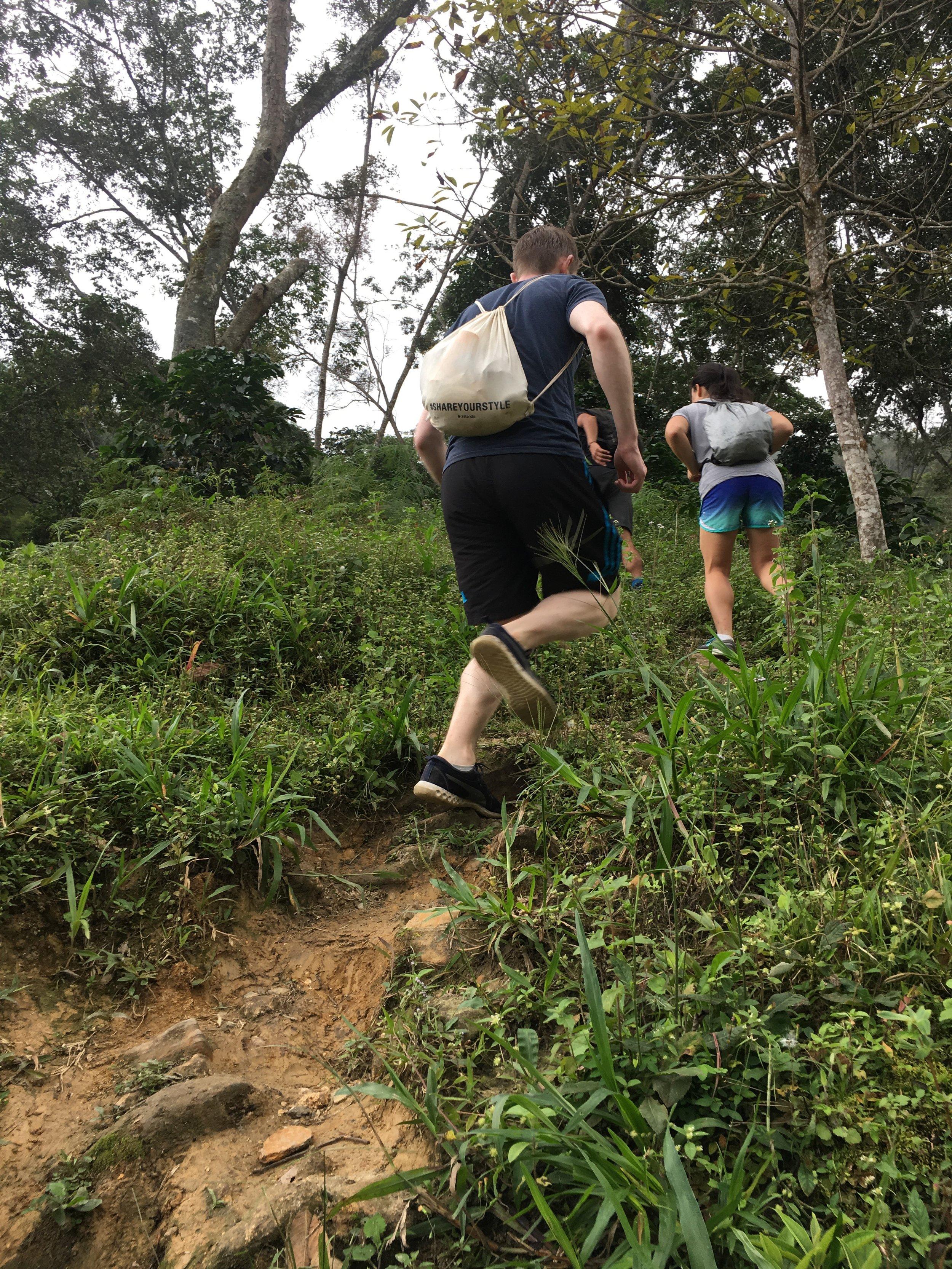Steep ascension through the plantation