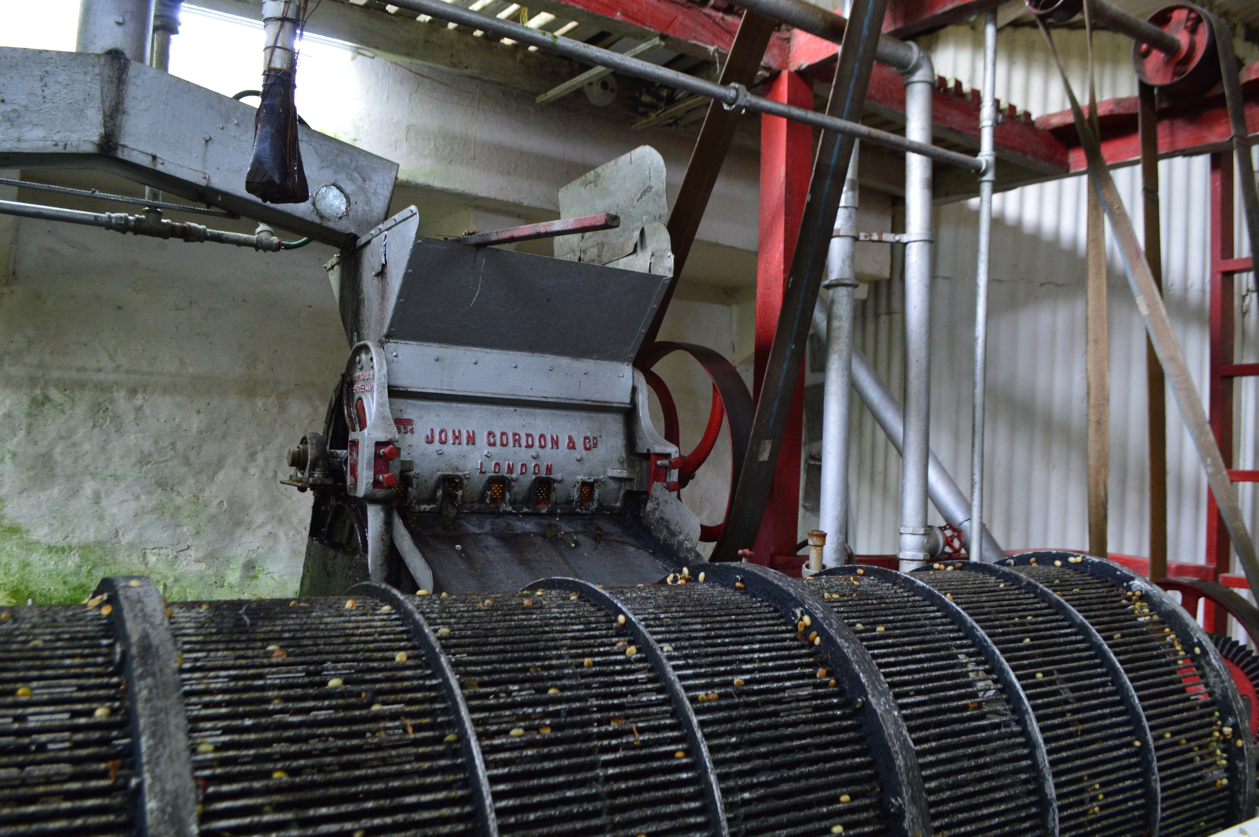 Beans are then sorted by quality and go through the fermentation process