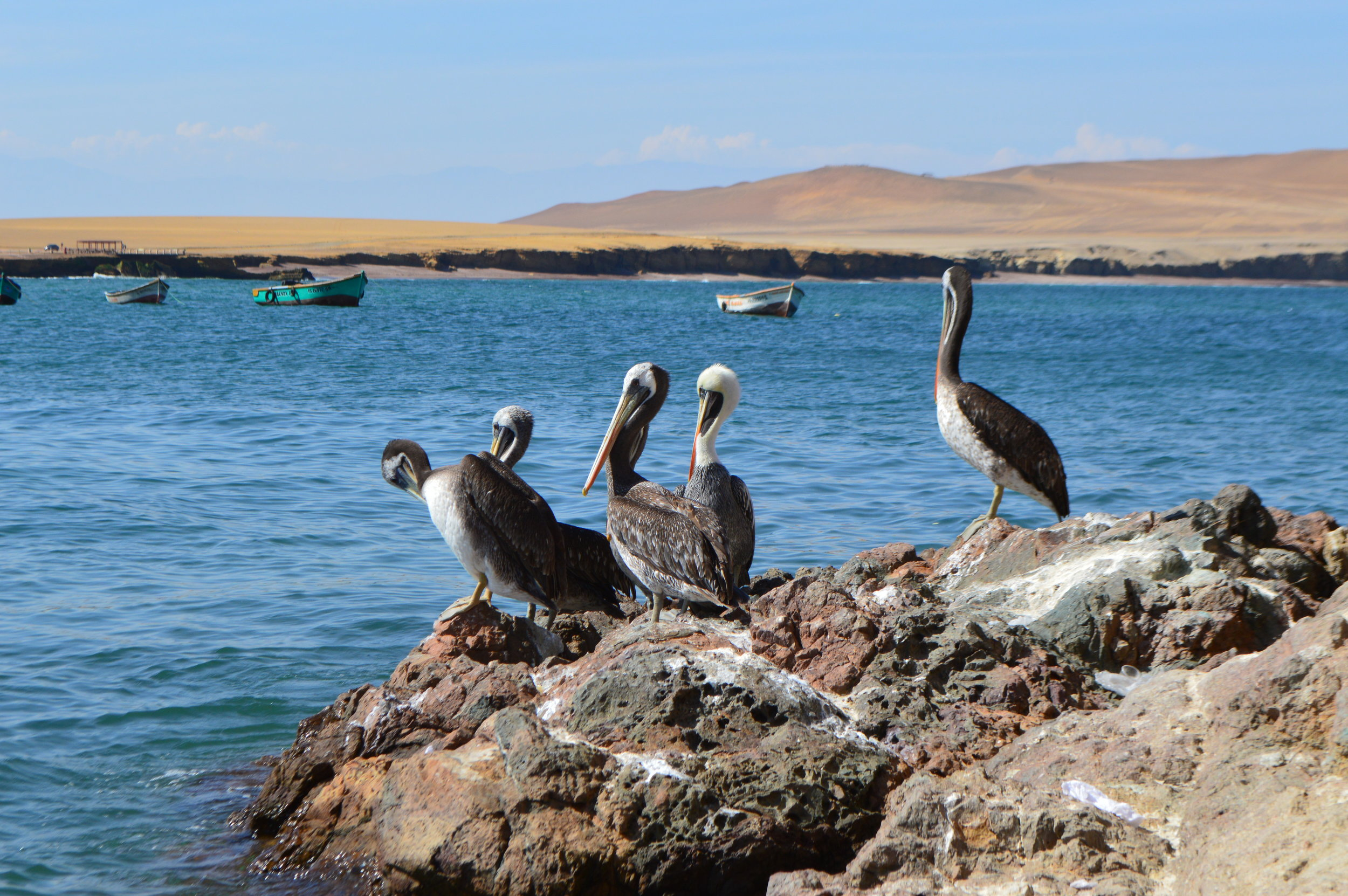 Pelicans perched on rocks outside the restaurant