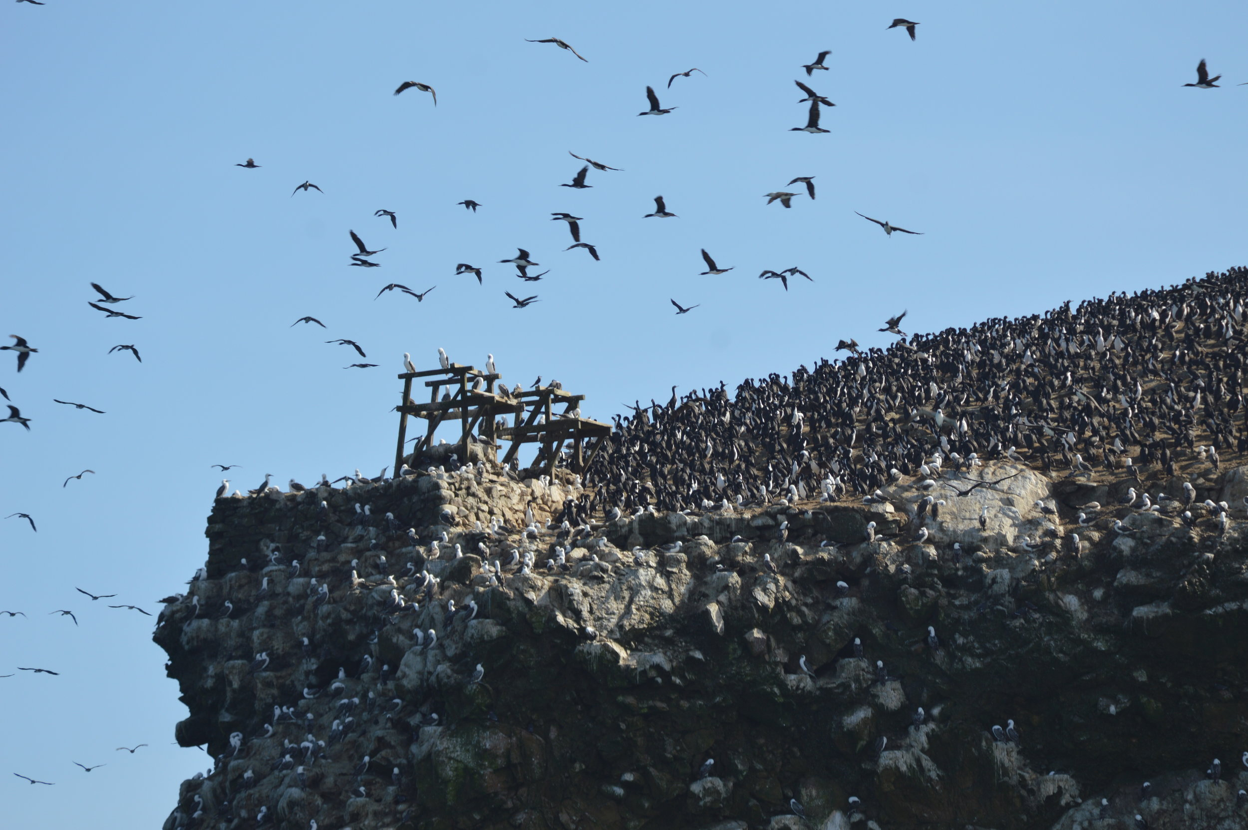 Millions of birds on this large rock