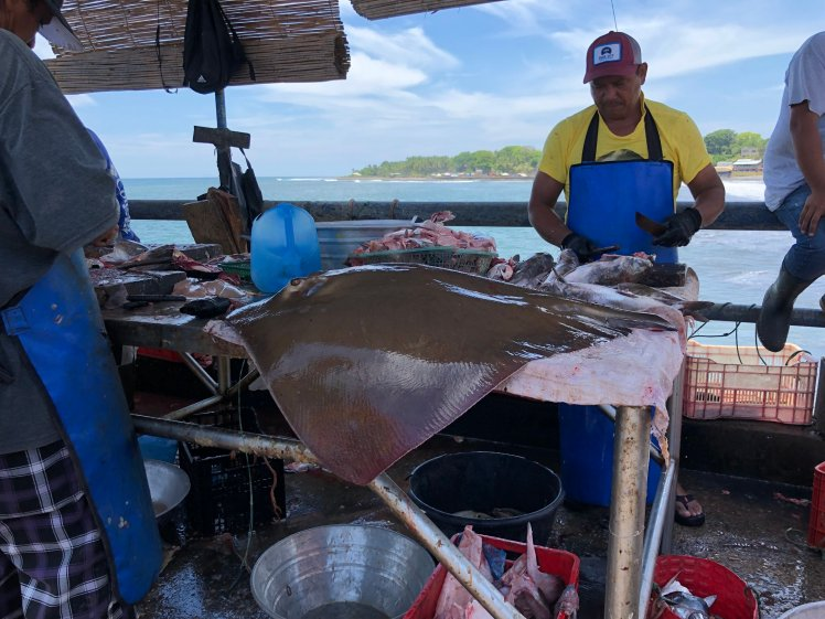 Fishermen cleaning fish and rays