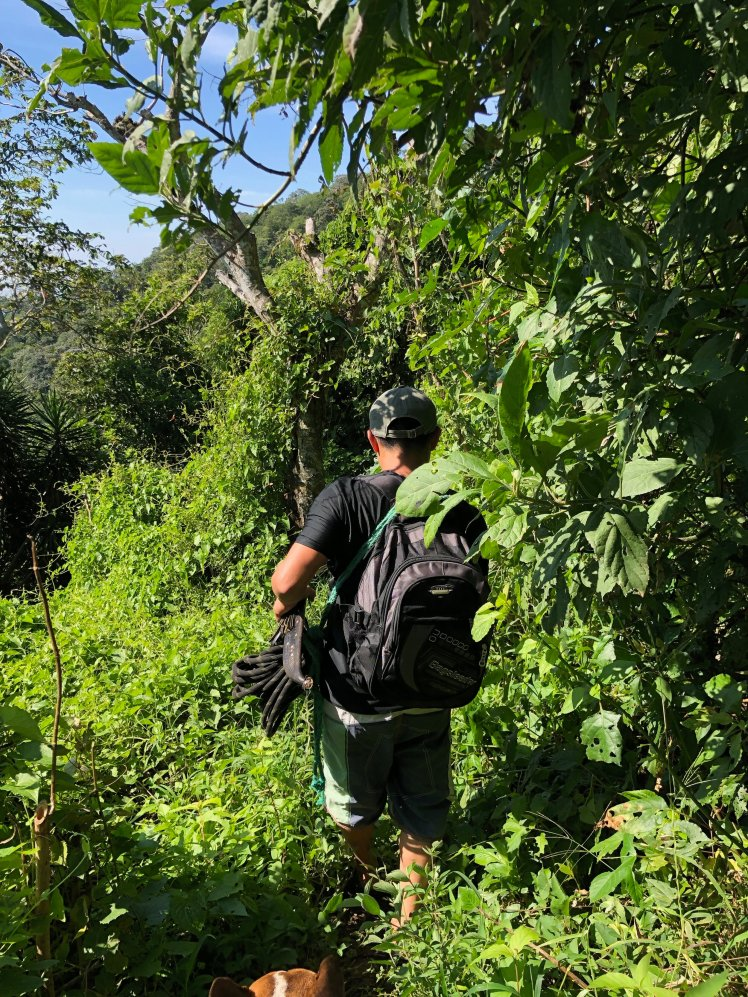 """Much of the """"trail"""" is overgrown with dense greenery"""
